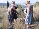 Массовые посадки деревье в Иудее и Самарии в Ту би-Шват