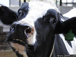 Польский суд против ритуального убоя скота евреями и мусульманами