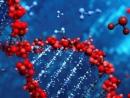 Израильские ученые выделили гены, отвечающие за аутизм