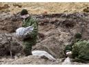 Останки более восьмисот жертв Брестского гетто подняли на начало марта