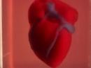 Ученые Израиля напечатали живое сердце на 3D-принтере