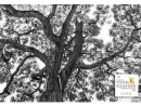 Поляк Шимон Бродзяк назван лучшим в мире автором черно-белых снимков