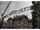 В Нью-Йорке открылась выставка «Освенцим. Не так давно, не так далеко»