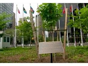 У штаб-квартиры ООН посадили дерево в честь Анны Франк