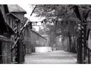 Комика загнобили за извинения перед жертвами Холокоста