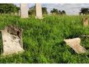 В Ужгороде вандалы разгромили еврейское кладбище