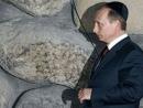 Последнее прибежище Путина